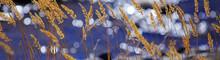 Autumn Yellow Grass Beautiful Background
