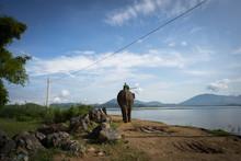 Elephant Walking By The Lake F...