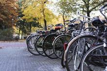 Bikes Parked In Rotterdam Under Autumn Trees