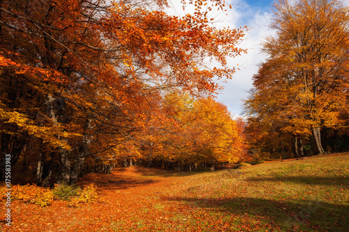 Foto op Canvas Herfst Autumn sunny woodland