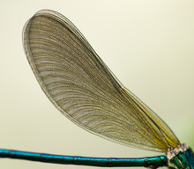 Wings Of A Dragonfly In Nature