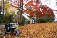 紅葉の中の三輪車