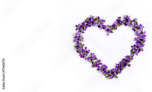 Delicate spring violets in the shape of a heart on a white background close up