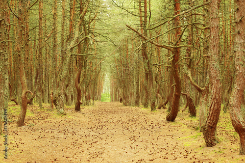 La pose en embrasure Beige Landscape with a clearing in the protected pine forest