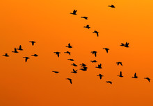 Silhouettes Of Birds Backlight...