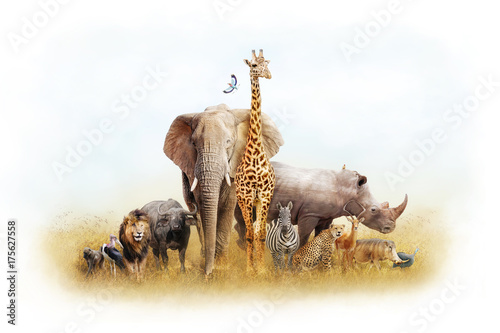 African Safari Animal Fantasy Land
