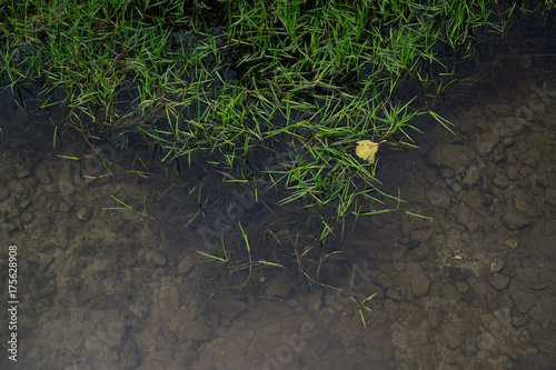 Foto op Aluminium Draken Grass in the water. Bottom with stones is visible under water surface. Minimalist detail of nature