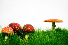 Green Lawn With Fly Agaric Fly...