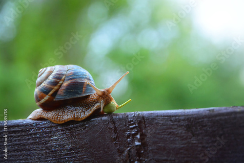Snail In A Rush