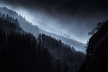 Dark Landscape With Foggy Forest