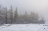 foggy weather in winter forest scenery. beautiful nature background with trees in hoarfrost in snowy meadow and overcast sky - 175641160