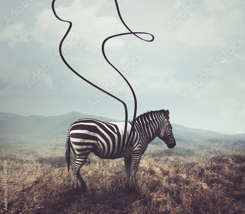 Poster de jardin Zebra Zebra and stripes
