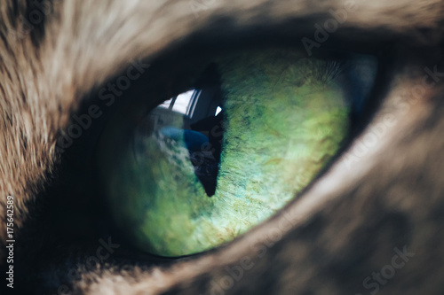Poster Puma Green Eye of Cat Extreme Close Up