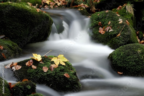 Montage in der Fensternische Forest river Kleine Ohe mountain stream and autumn leaves, Bayerischer Wald (Bavarian Forest), Bavaria, Germany, Europe