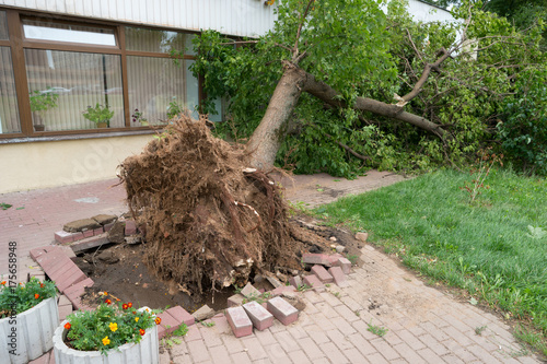 Photo sur Aluminium Tempete tree fell on the building. storm in city.
