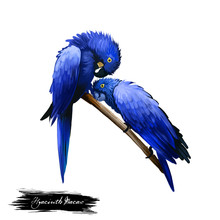 Hyacinth Macaw Digital Art Ill...