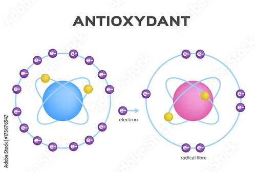 Photo free radical and Antioxidant vector