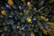 Aerial View Of Colorful Fall F...