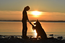 Dog Giving Paw At Sunset