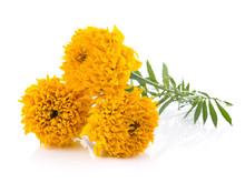 Marigold Flowers On White Back...