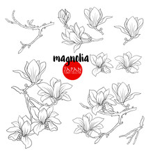Branch Of Magnolia Blossoms, Stock Line Vector Illustration Bota