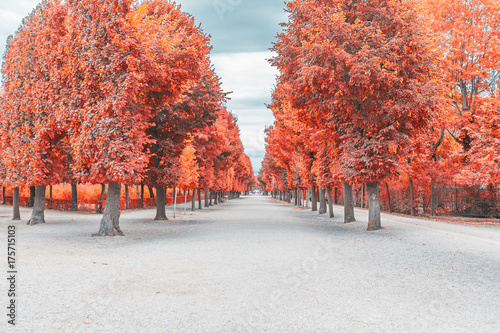 Poster de jardin Corail autumn alley in the park