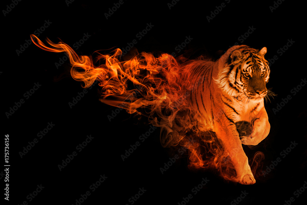 Fototapeta tiger animal kingdom collection with amazing effects