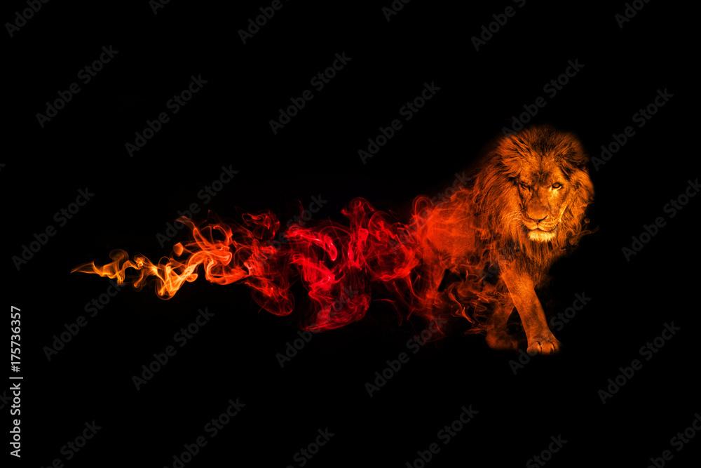 Fototapeta Lion animal kingdom collection with amazing effect