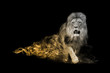 Lion one of the big five animals you must see in africa animal kingdom collection with amazing effect