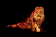 Lion King Animal Kingdom Collection With Amazing Effect