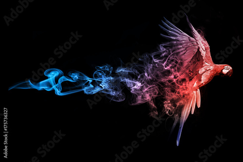 Photo  Macaw blue red animal kingdom collection with amazing effect