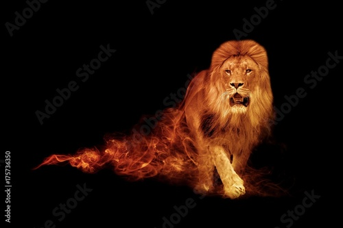 Foto op Plexiglas Leeuw Lion king animal kingdom collection with amazing effect