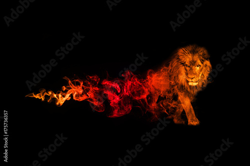 Spoed Fotobehang Leeuw Lion animal kingdom collection with amazing effect