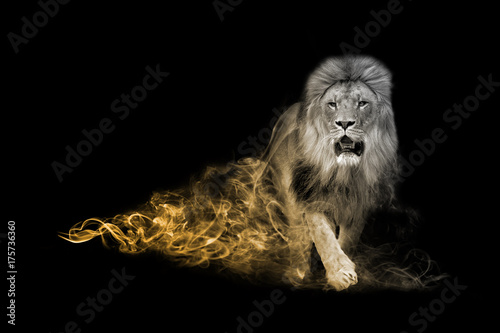 Recess Fitting Lion Lion one of the big five animals you must see in africa animal kingdom collection with amazing effect