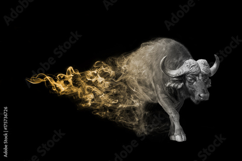 Foto op Aluminium Buffel Cape buffalo one of the africa big vife animals you must see Animal kingdom collection