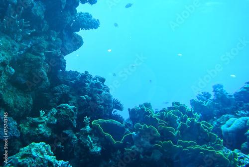 Plakat Piękno podwodnego świata. Korale z Ejlat. Izrael