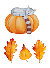 Set Of Autumn Leaves And A Cat...