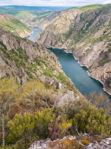 Heathery bank of Sil river canyon in the province of Ourense, Galicia, Spain