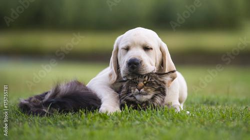 Keuken foto achterwand Kat best friends. Puppy with cat