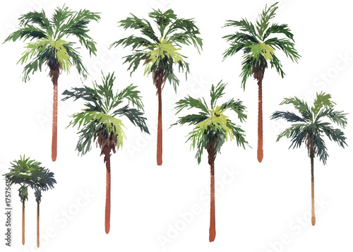 Tuinposter Palm boom Multiple individual palm trees