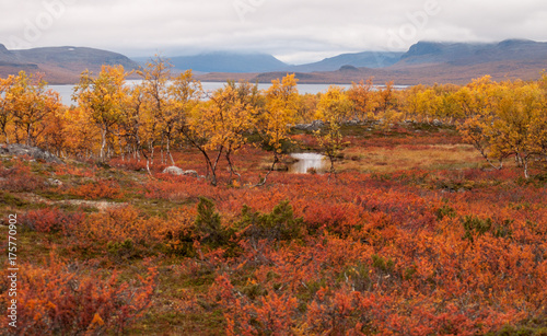 Foto op Aluminium Oranje eclat Red and yellow autumn meadow landscape in Lapland with river and lake. Good backround image.