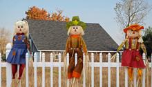 Autumn Scarecrow Dolls On Whit...