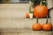 Pumpkins On The Steps At The Door. Decorations For Halloween. Copy Space For Your Text