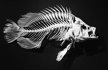Skeleton Of Ancient Fish On A ...