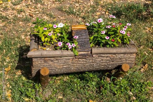 Beautiful Flowers Grows On A Tree Stump. Garden Decoration ...