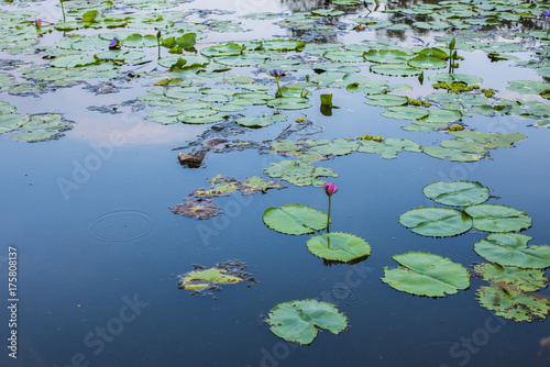 Deurstickers Waterlelies Natural Pavilion landmark of Suan Luang Rama IX Public Park, Bangkok, Thailand