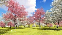 Flowering Dogwood Trees In Orc...