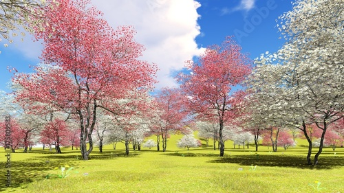 Kwiatonośni dereniowi drzewa w sadzie w wiosna czasu 3d renderingu