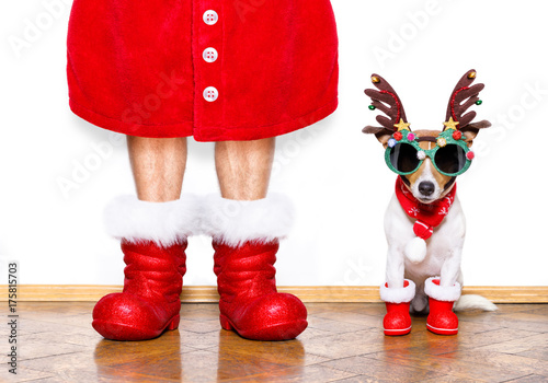 Poster Crazy dog christmas santa claus dog