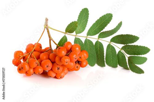 Fotografie, Obraz  Orange rowan with leaf isolated on white background